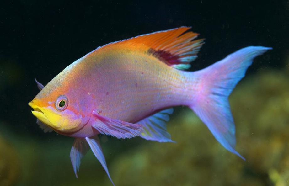фото красивые рыбы