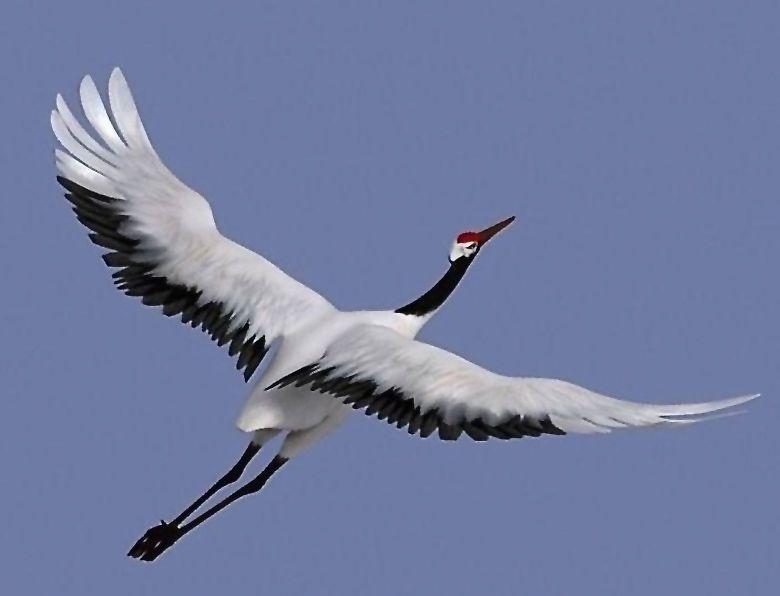 Купить попугаев кур голубей  продажа птиц в Краснодаре