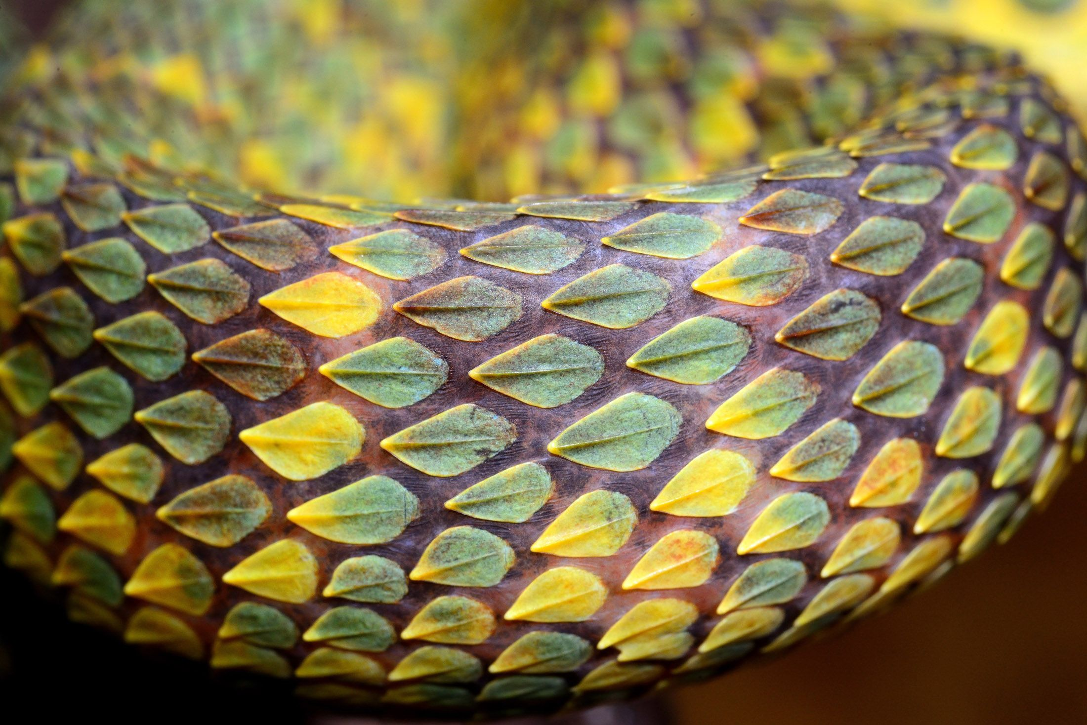 Животные влажных экваториальных лесов фото картинки