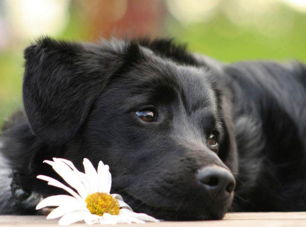 щенков собак разных пород