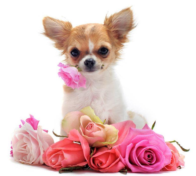 http://foto-zverey.ru/sobaki/dog36.jpg